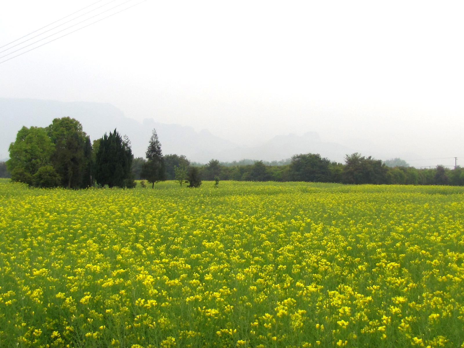 让我们暂时远离城市的喧扰,漫步在山水田野中,尽亨大自然给我们带来